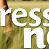 Ny Stressa Ner