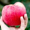 Ett äpple för miljön